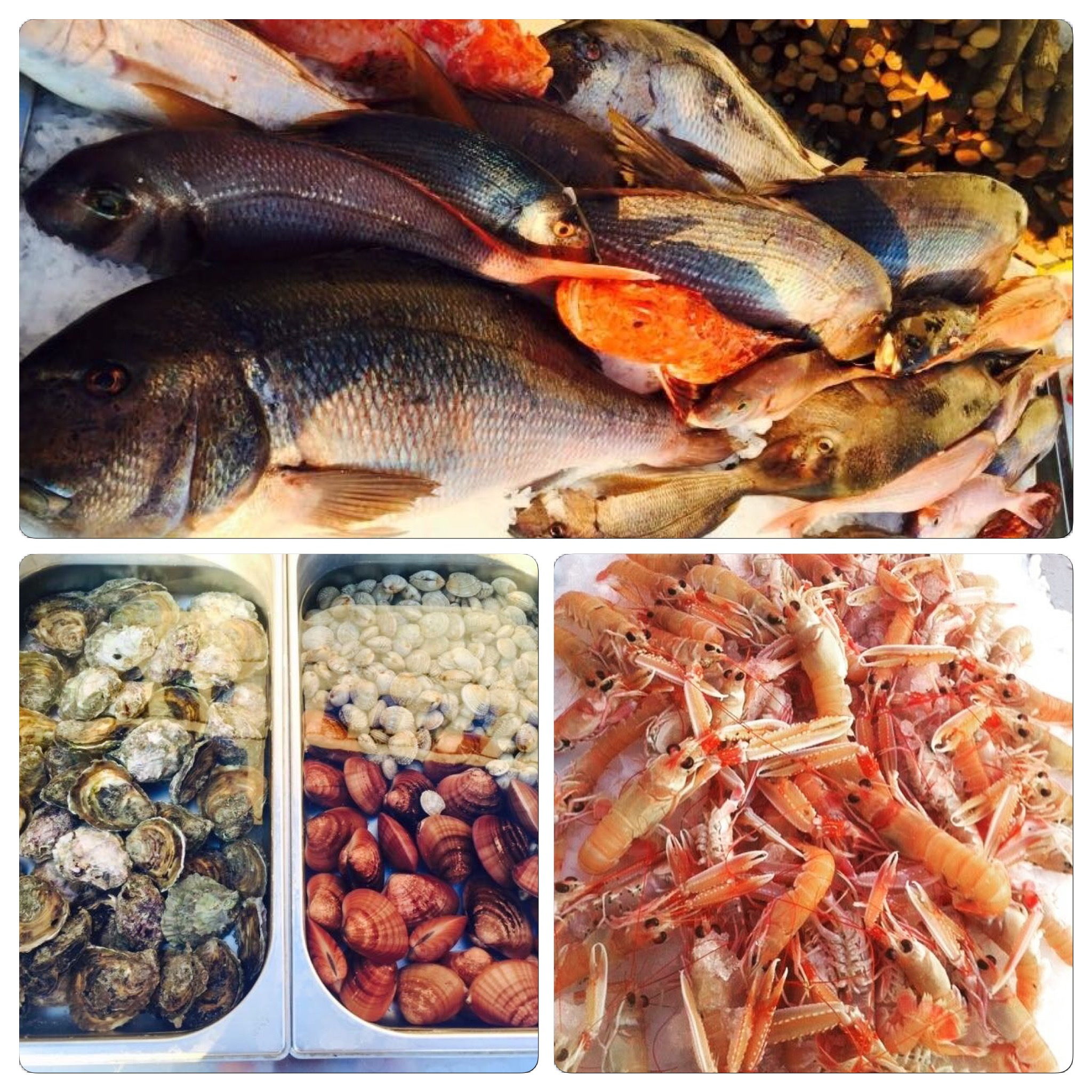 All health benefits of Gariful seafood for beauty and vitality